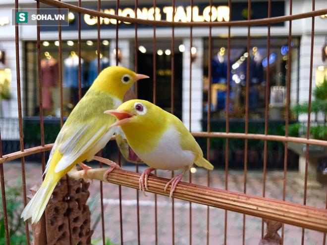 Độc nhất tại Việt Nam: 72 con chim quý tộc trị giá 10 tỷ đồng, có 2 bảo mẫu riêng chăm sóc - ảnh 5