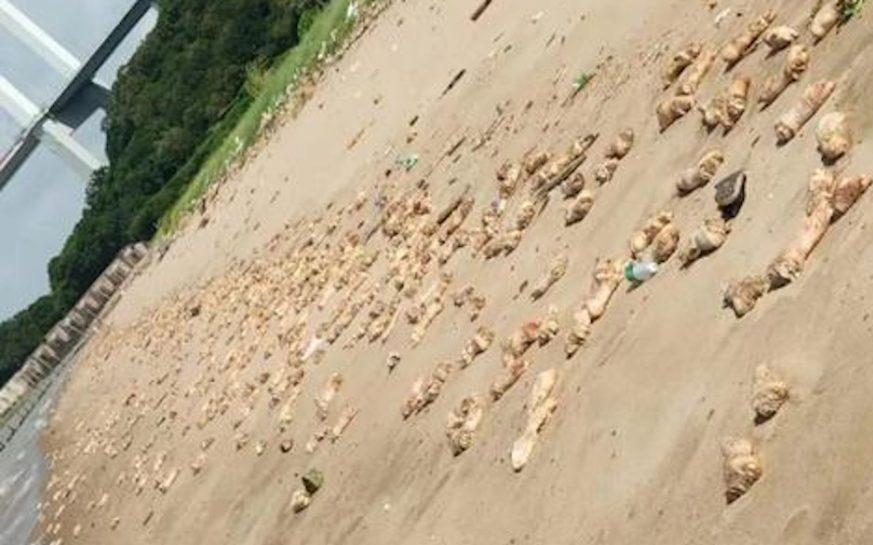 20 tấn móng giò nhởn nhơ nằm chill bên bờ biển Trung Quốc