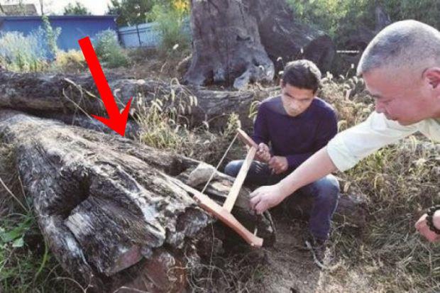 Mang khúc gỗ xấu xí về vứt ở góc vườn, 5 năm sau người đàn ông choáng váng phát hiện đó là cả gia tài trị giá 66 tỷ đồng - ảnh 1