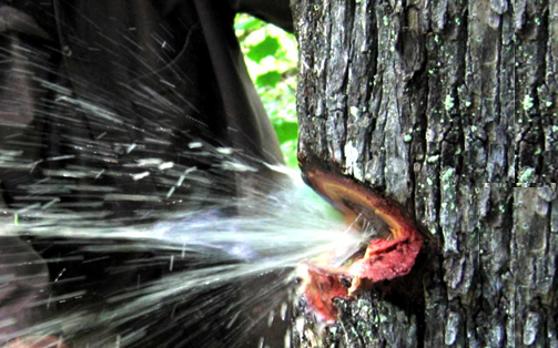 Video: Nước bắn tung toé từ thân cây như vòi mở van tại Ấn Độ gây sốt MXH