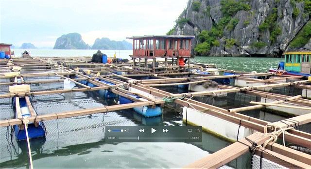 Bão số 2: Hải Phòng, Quảng Ninh sơ tán dân, cấm biển từ 0h ngày 2/8 - ảnh 5