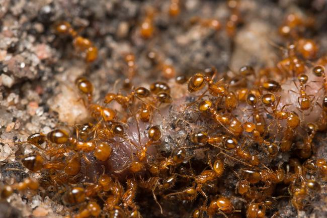 Pha thoát chết kỳ lạ nhưng may mắn nhất quả đất: Nhảy dù rơi trúng tổ kiến lửa, tưởng họa lại hóa thành may vì được kiến cắn - ảnh 4