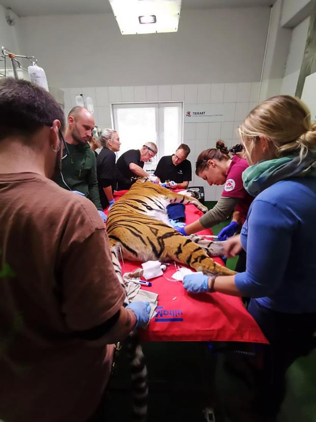Nàng hổ móm được lắp răng giả mạ vàng xịn đét, tăng muôn phần cool ngầu với chị em - Ảnh 3.