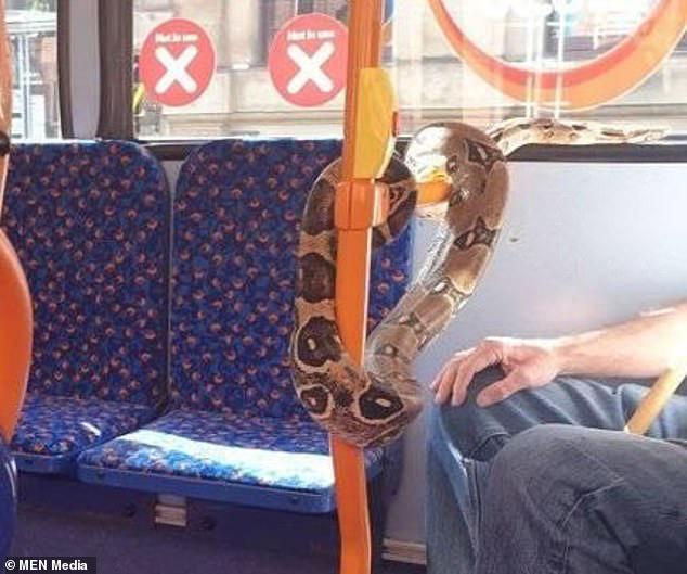 Hành khách kinh hãi chứng kiến người đàn ông bị con trăn quấn quanh cổ trên xe bus, tìm hiểu nguyên nhân lại càng bất bình hơn - ảnh 1