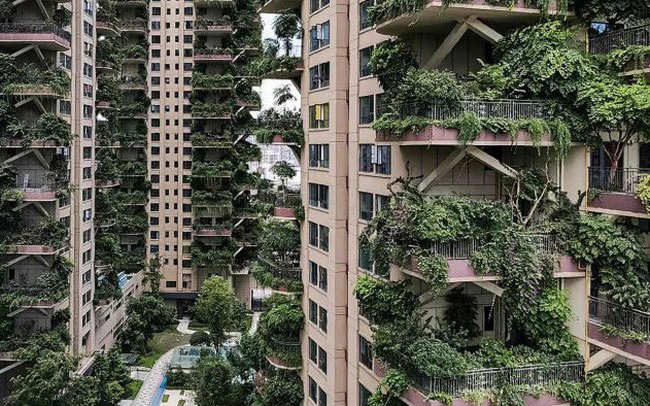 Trung Quốc tham vọng xây thiên đường sinh thái nhưng lại hóa thành phố ma vì… muỗi - ảnh 1