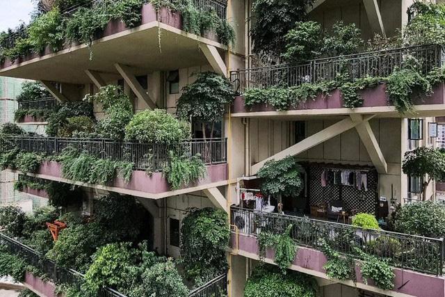 Trung Quốc tham vọng xây thiên đường sinh thái nhưng lại hóa thành phố ma vì… muỗi - ảnh 2