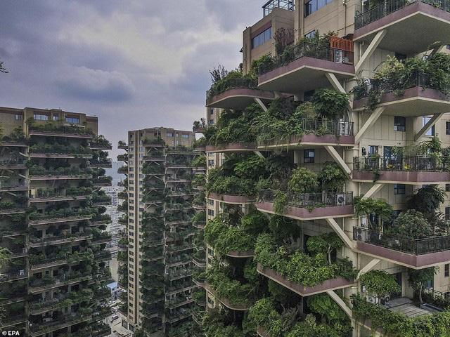 Trung Quốc tham vọng xây thiên đường sinh thái nhưng lại hóa thành phố ma vì… muỗi - ảnh 5