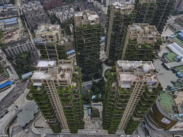 Trung Quốc tham vọng xây thiên đường sinh thái nhưng lại hóa thành phố ma vì… muỗi - ảnh 6