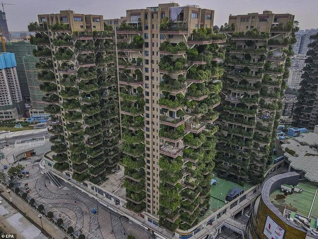Trung Quốc tham vọng xây thiên đường sinh thái nhưng lại hóa thành phố ma vì… muỗi - ảnh 8