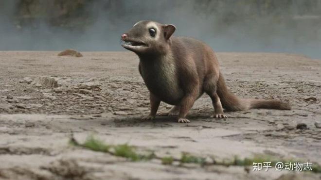 Giải đáp thắc mắc loài dơi đã tiến hóa từ con vật gì? Tổ tiên của chúng có phải là loài chuột không? - ảnh 3