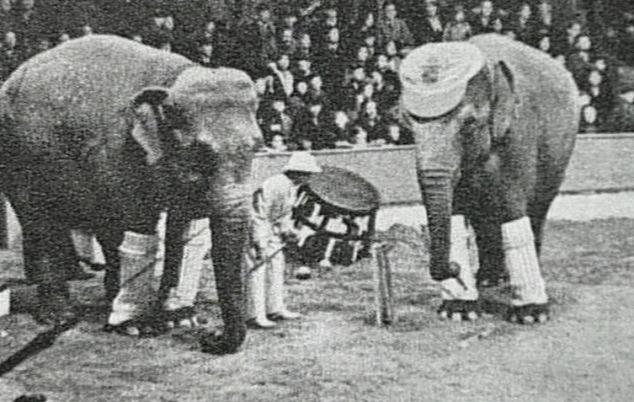Bức hình như tranh vẽ nhưng lại là ảnh chụp và phía sau là câu chuyện con voi bất hạnh nhất trong lịch sử khiến nhiều người rơi lệ - ảnh 1