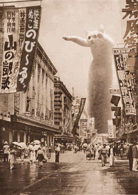 Nobiko - chú mèo huyền thoại Internet với bức ảnh meme Con mèo dài ngoằng qua đời ở tuổi 18 - ảnh 2