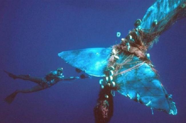 Loạt ảnh khiến bất kỳ ai nhìn thấy cũng ám ảnh về sức ảnh hưởng kinh hoàng của ô nhiễm môi trường đối với các loài động vật - ảnh 4