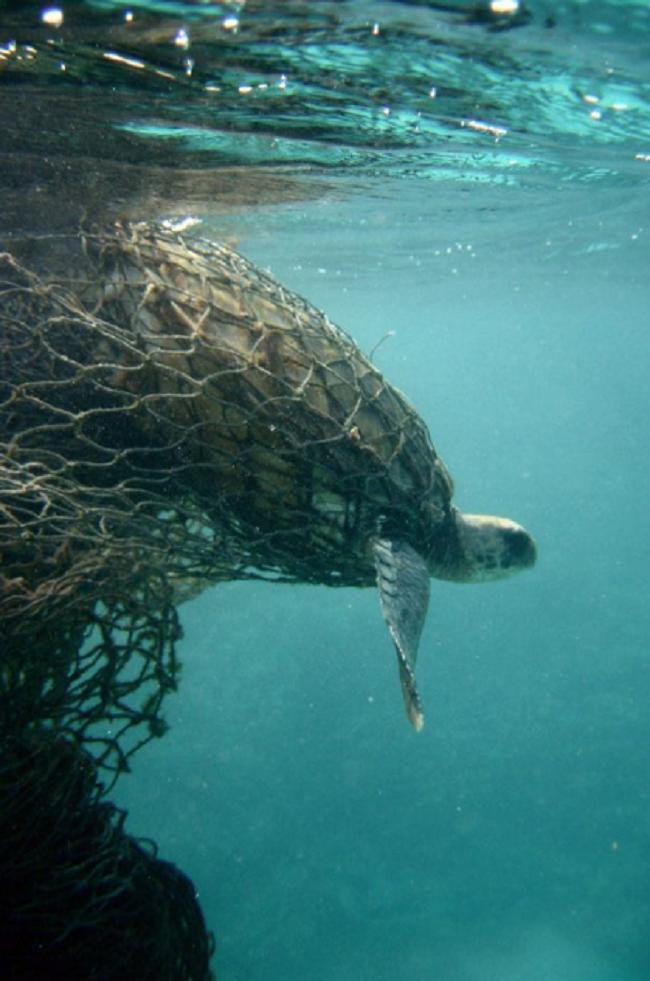 Loạt ảnh khiến bất kỳ ai nhìn thấy cũng ám ảnh về sức ảnh hưởng kinh hoàng của ô nhiễm môi trường đối với các loài động vật - ảnh 5