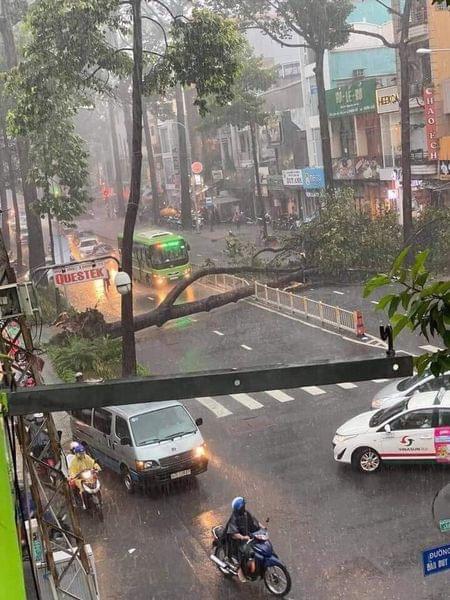 Sau vụ cây xanh bật gốc đè chết người: Vẫn còn nhiều cây đã già cỗi có rễ lộ thiên, nhánh vươn ra mặt đường ở Sài Gòn - ảnh 1