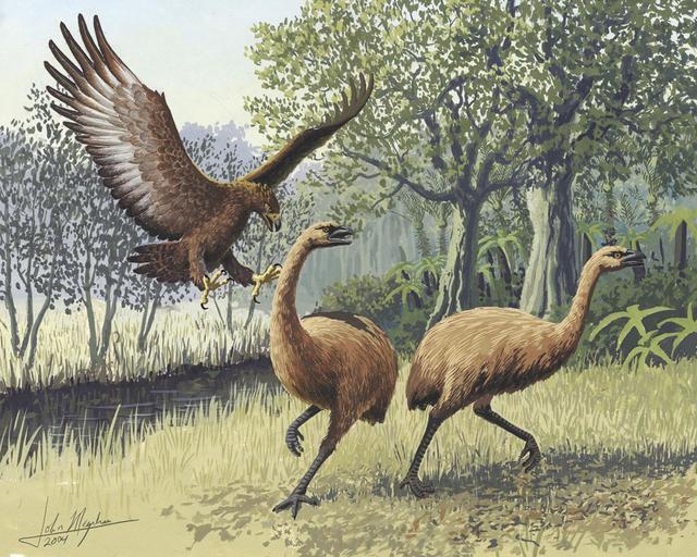 Những loài động vật tuyệt chủng vì sự thiếu hiểu biết của loài người - ảnh 1