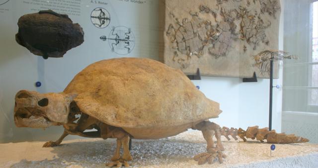 Những loài động vật tuyệt chủng vì sự thiếu hiểu biết của loài người - ảnh 3