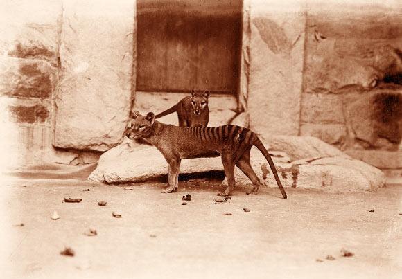 Những loài động vật tuyệt chủng vì sự thiếu hiểu biết của loài người - ảnh 4