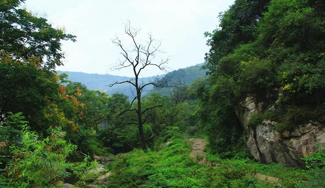 Sau 4 ngày mất tích khi chạy việt dã, người phụ nữ được tìm thấy trên cây, câu chuyện sinh tồn rừng rú khiến mọi người quan tâm - ảnh 1