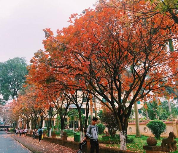 1 ngày đi chơi Cầu Giấy: Quy tụ nhiều trường đại học bậc nhất Hà Nội, đặc sản Chợ Xanh ngoa ngoắt đi 5 bước, 15 tiếng chửi - ảnh 4