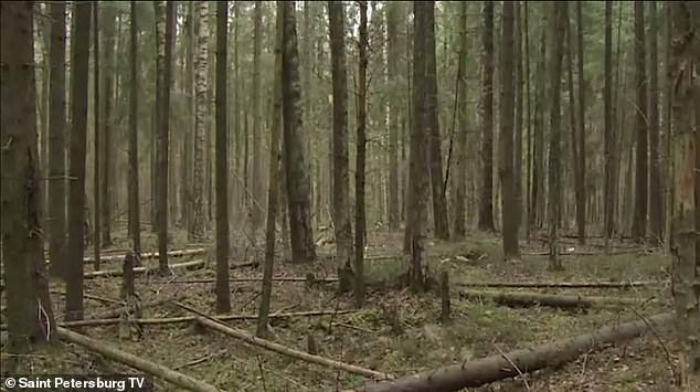 Đi bộ trong rừng, người đàn ông kinh hồn bạt vía khi vấp phải đầu người và một loạt chi tiết rùng rợn khiến cảnh sát đau đầu tìm lời giải - Ảnh 4.