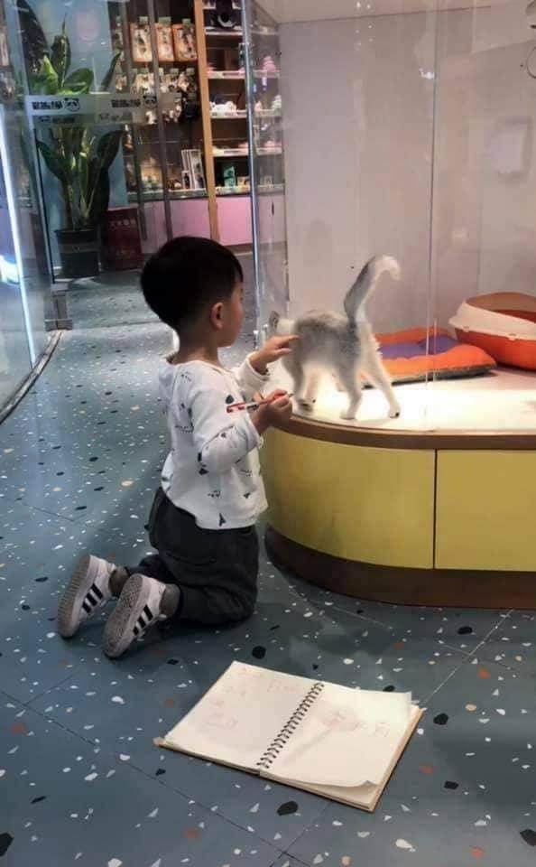 Cậu bé lăn lộn cả tiếng để vẽ mèo nộp cho cô giáo, tưởng đẹp miễn chê ai ngờ lại thành ra thế này - ảnh 5