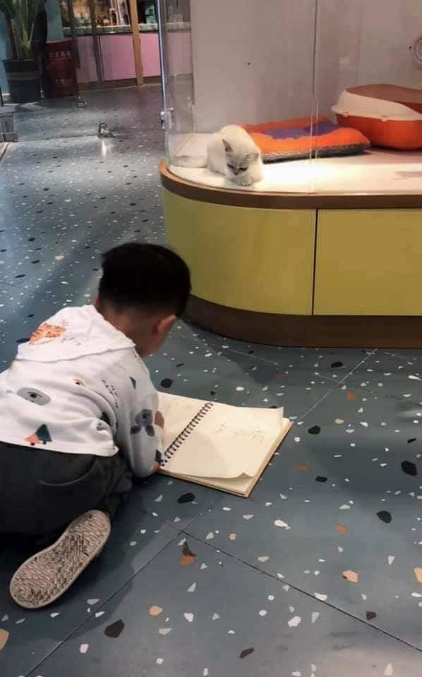 Cậu bé lăn lộn cả tiếng để vẽ mèo nộp cho cô giáo, tưởng đẹp miễn chê ai ngờ lại thành ra thế này - ảnh 4