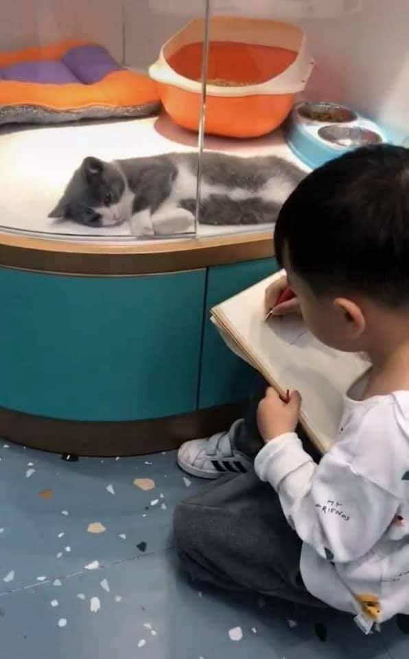 Cậu bé lăn lộn cả tiếng để vẽ mèo nộp cho cô giáo, tưởng đẹp miễn chê ai ngờ lại thành ra thế này - ảnh 3