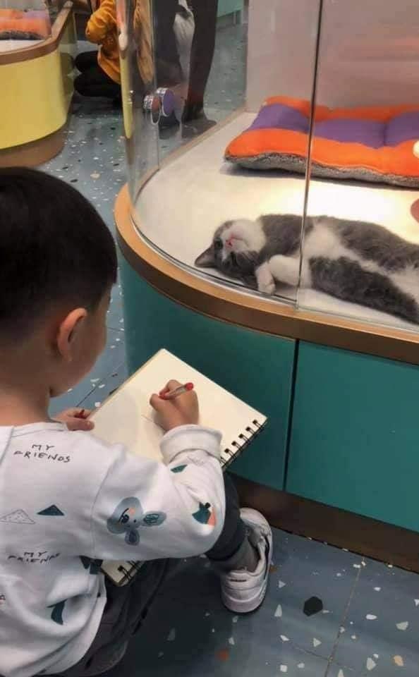 Cậu bé lăn lộn cả tiếng để vẽ mèo nộp cho cô giáo, tưởng đẹp miễn chê ai ngờ lại thành ra thế này - ảnh 6