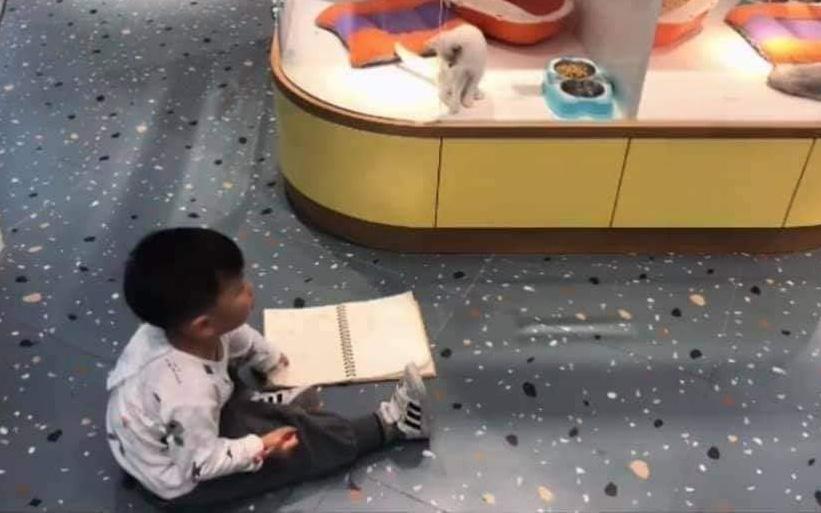Cậu bé lăn lộn cả tiếng để vẽ mèo nộp cho cô giáo, tưởng đẹp miễn chê ai ngờ lại thành ra thế này