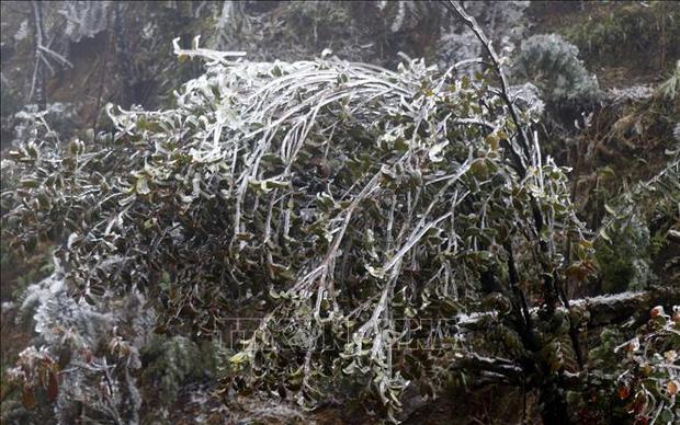 Livestream: Nhiệt độ xuống -5 độ C, tuyết phủ trắng Y Tý (Bát Xát) - Ảnh 1.