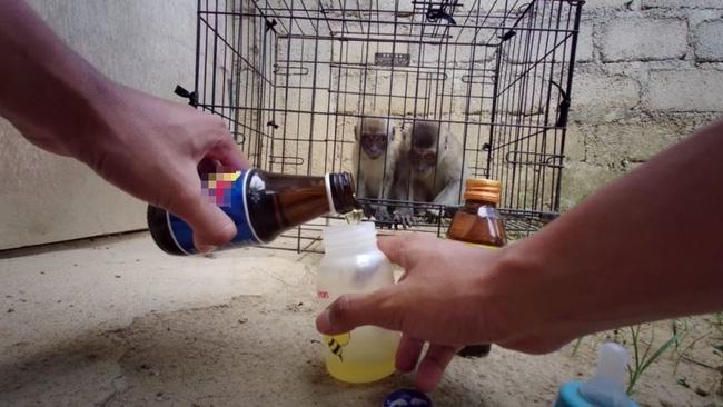 YouTuber khiến dư luận phẫn nộ vì ép khỉ ăn ớt, uống Bò Húc câu view - ảnh 1