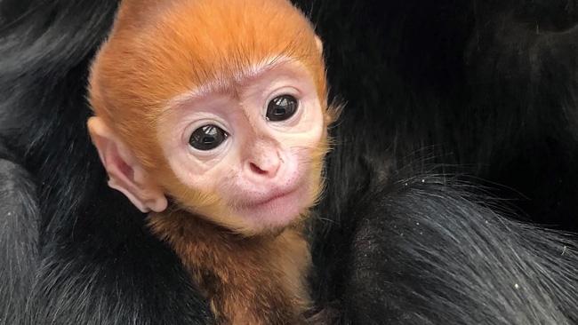 Bé khỉ Mỹ sinh ra đã bị mẹ bỏ rơi, được nhân viên vườn thú đặt tên tiếng Việt cực đáng yêu khiến trăm nghìn dân mạng lịm tim - ảnh 3