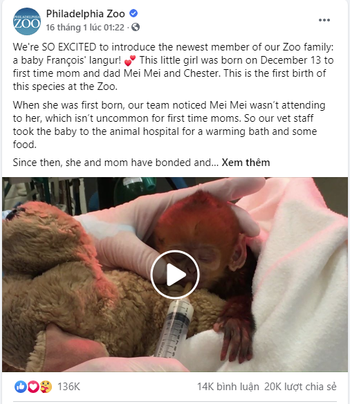 Bé khỉ Mỹ sinh ra đã bị mẹ bỏ rơi, được nhân viên vườn thú đặt tên tiếng Việt cực đáng yêu khiến trăm nghìn dân mạng lịm tim - ảnh 5