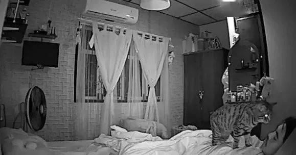 Thức dậy bỗng dưng thấy cả người đau nhức, cô gái vội kiểm tra camera mới ngỡ ngàng nhận ra mình bị mèo cưng trừng phạt cả đêm - ảnh 5