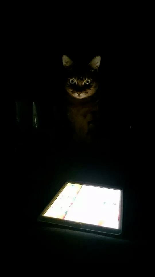 Thức dậy bỗng dưng thấy cả người đau nhức, cô gái vội kiểm tra camera mới ngỡ ngàng nhận ra mình bị mèo cưng trừng phạt cả đêm - ảnh 11