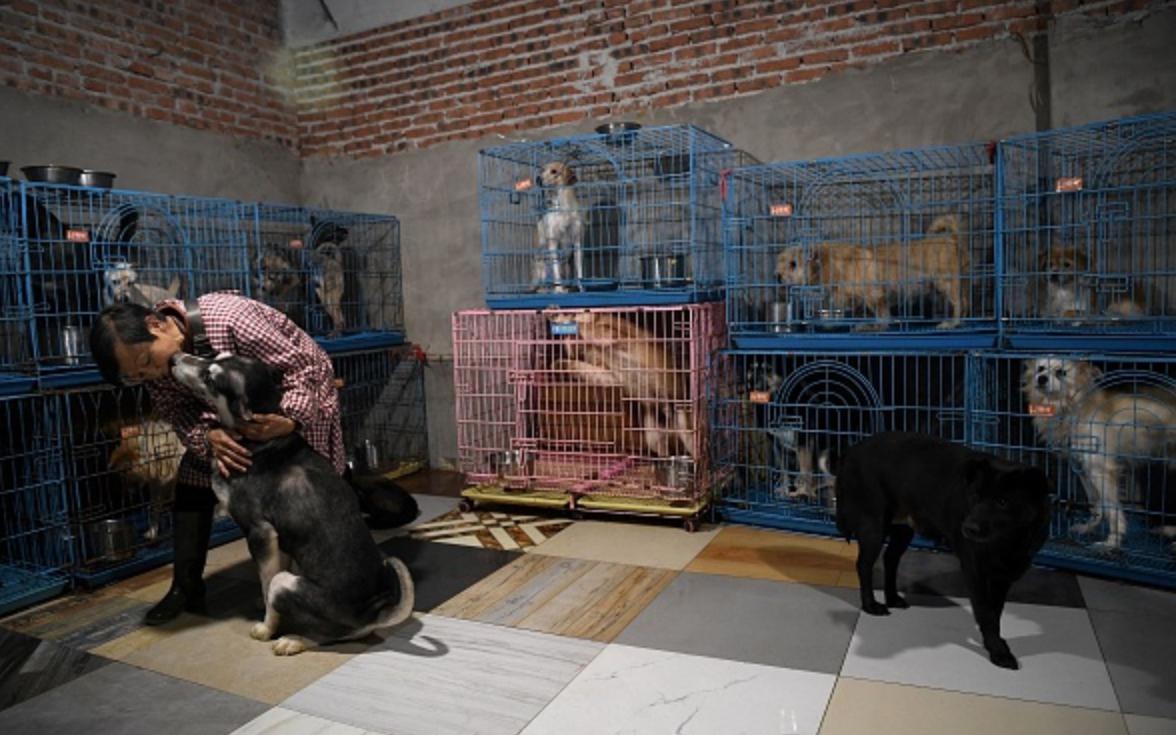 Chuyện về người phụ nữ chung sống với hơn 1000 con chó, 100 con mèo và 4 con ngựa: Đây là những gì xảy ra mỗi ngày trong ngôi nhà đó