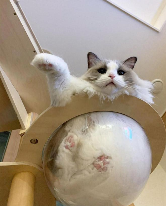 Mèo và bát thủy tinh chính là combo siêu cấp đáng yêu càng xem nhiều càng nghiện - Ảnh 1.