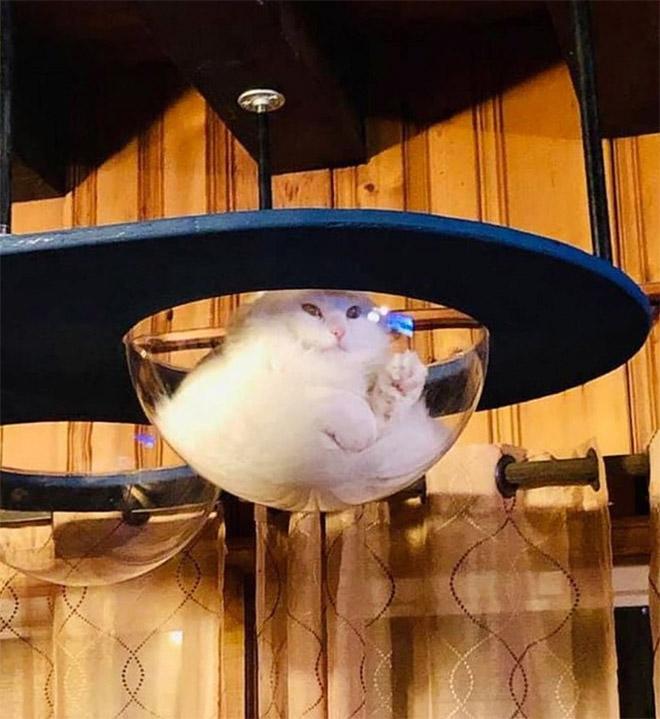 Mèo và bát thủy tinh chính là combo siêu cấp đáng yêu càng xem nhiều càng nghiện - ảnh 11