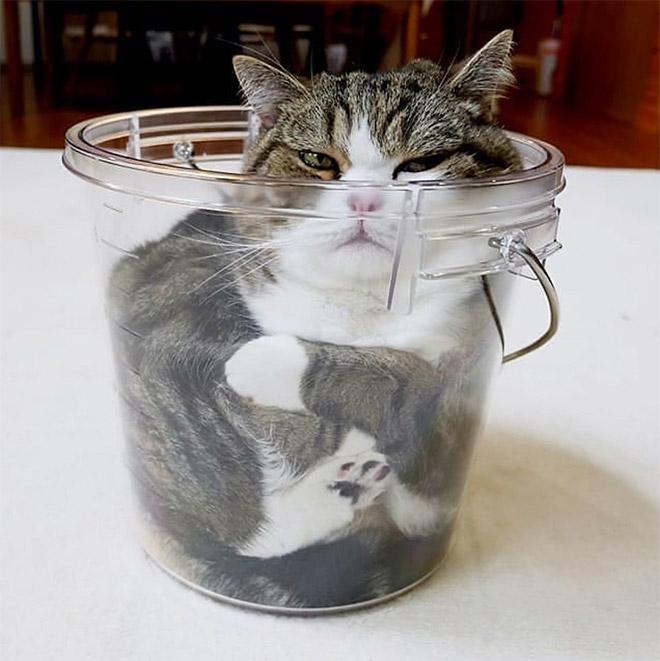 Mèo và bát thủy tinh chính là combo siêu cấp đáng yêu càng xem nhiều càng nghiện - ảnh 19