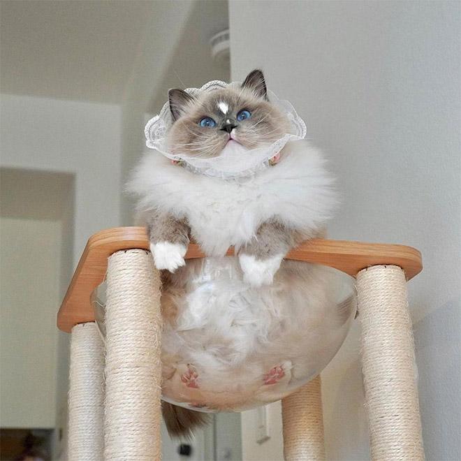 Mèo và bát thủy tinh chính là combo siêu cấp đáng yêu càng xem nhiều càng nghiện - ảnh 20