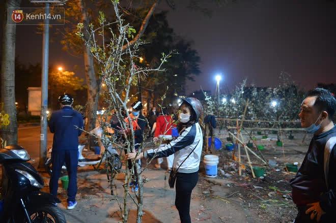 Người Hà Nội rộ mốt chơi hoa lê tiền triệu sau Tết, chuyên gia lên tiếng: Nên cấm việc chặt lê rừng - ảnh 4