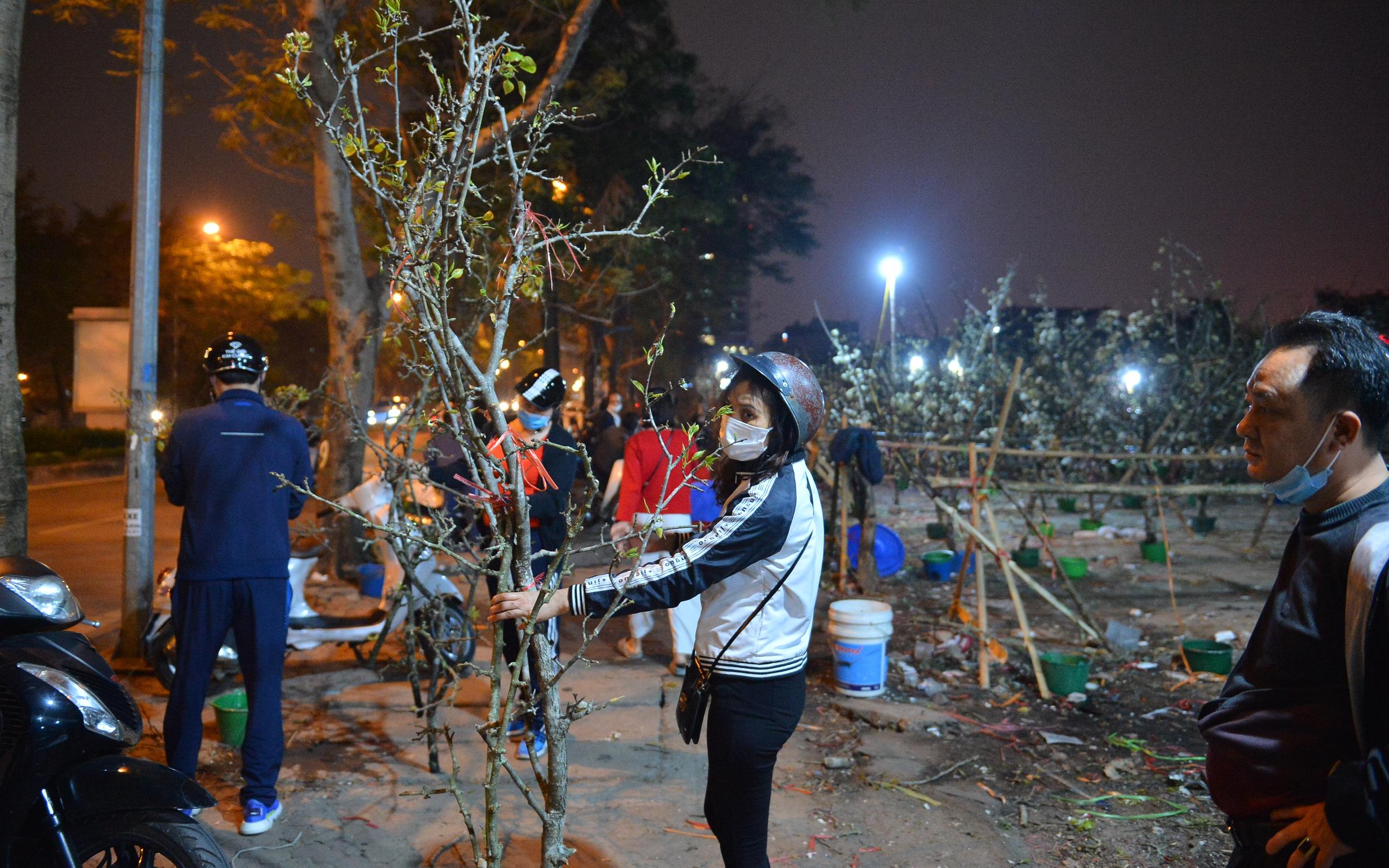 """Người Hà Nội rộ mốt chơi hoa lê tiền triệu sau Tết, chuyên gia lên tiếng: """"Nên cấm việc chặt lê rừng"""""""