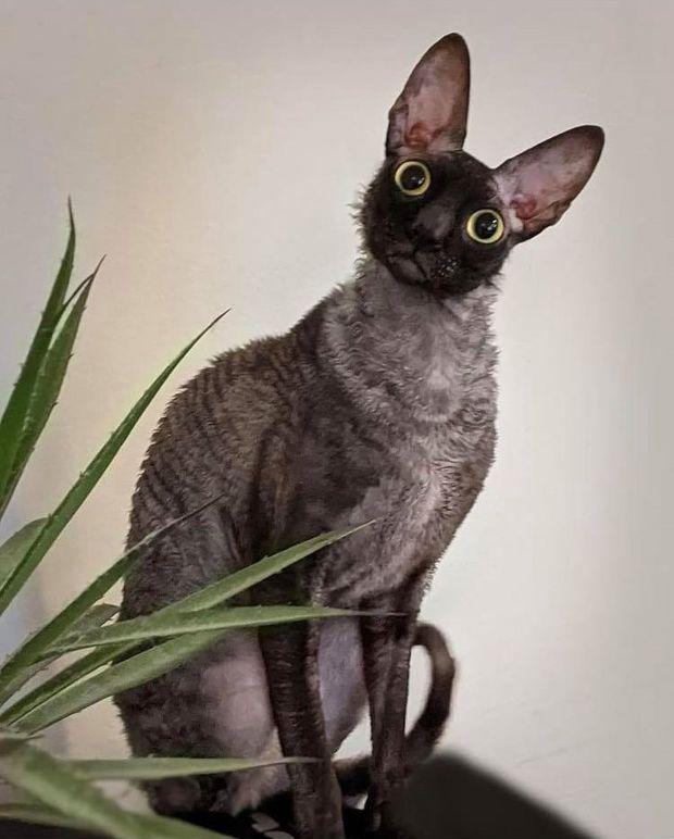 Khoe mèo cưng lên MXH, người phụ nữ nhận về loạt bình luận trái chiều vì vẻ ngoài độc nhất của con vật, sợ nhất là tin nhắn từ nhà trừ tà - ảnh 2