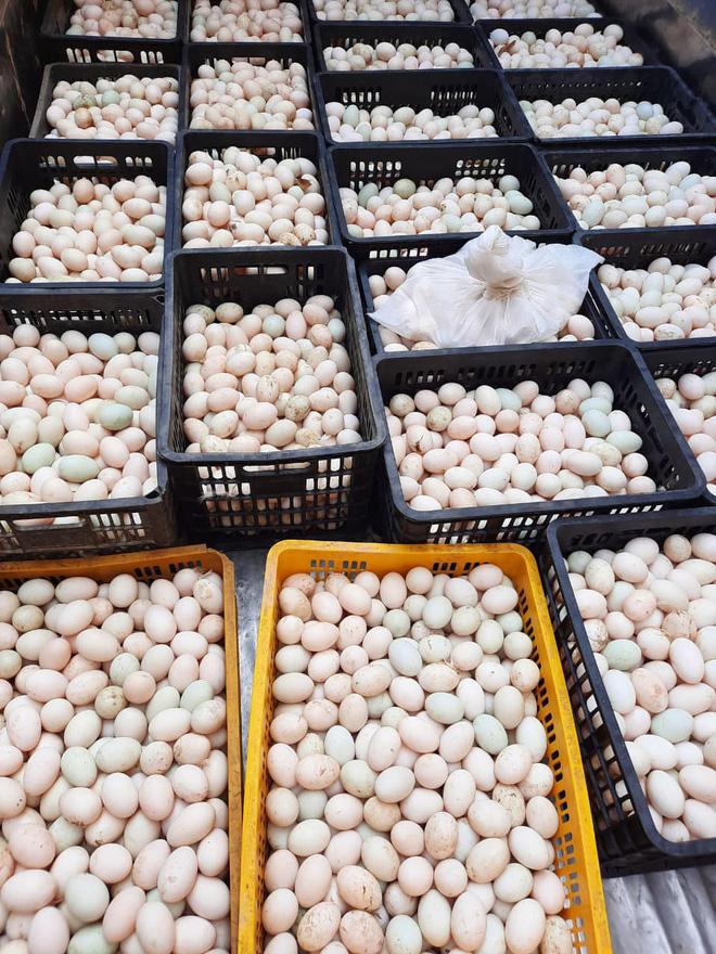 Bỏ xó cả chục ô tô bạc tỷ, ông chủ showroom đi bán ngô và trứng gà, giải cứu nông sản Hải Dương - ảnh 5
