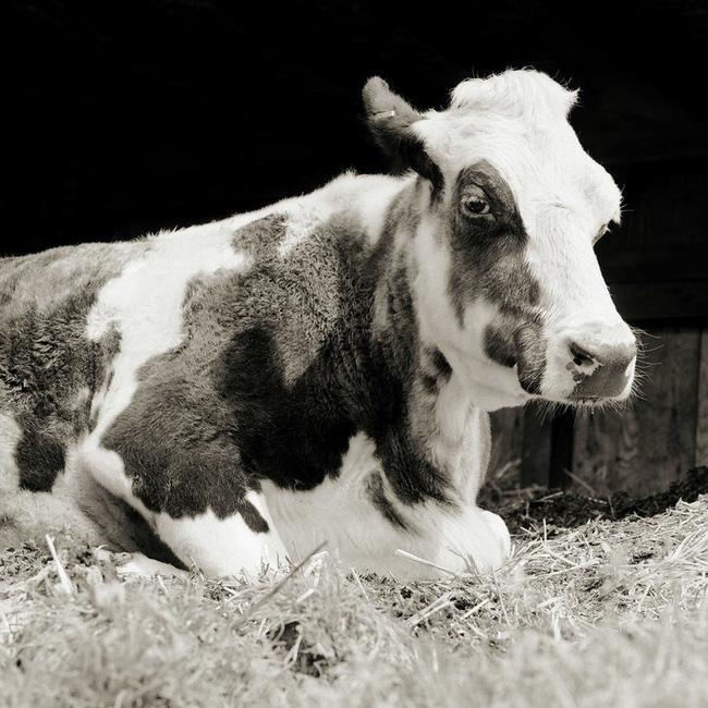 Chùm ảnh những con vật được cho phép sống đến già gây ám ảnh lạ kỳ: Khi các mảnh đời ngắn ngủi được ban tặng sự sống buồn tủi - ảnh 3