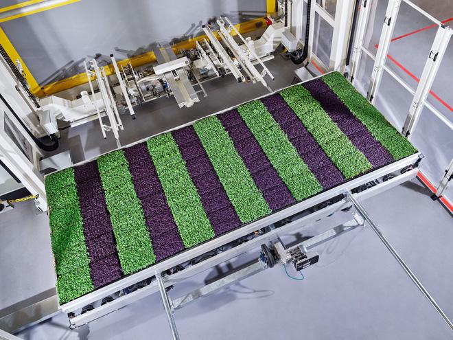 Sẽ thế nào khi rau được trồng trong nhà máy, bằng robot, AI và thế hệ nông dân 4.0? - ảnh 8