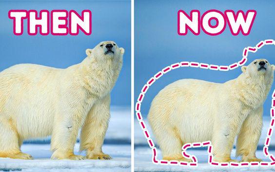 Các loài vật trên Trái đất đang ngày càng bé lại, nhưng đố bạn biết lý do vì sao