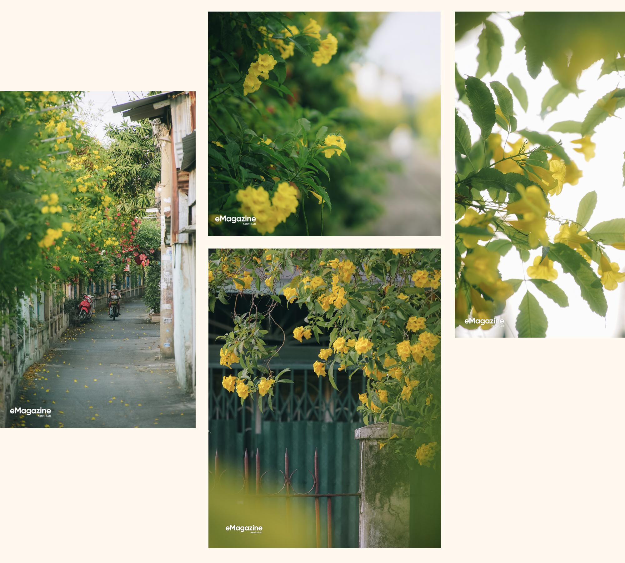 Hà Nội, Sài Gòn những ngày giao mùa: Hoa bay rợp trời làm lòng mình dịu lại - Ảnh 13.