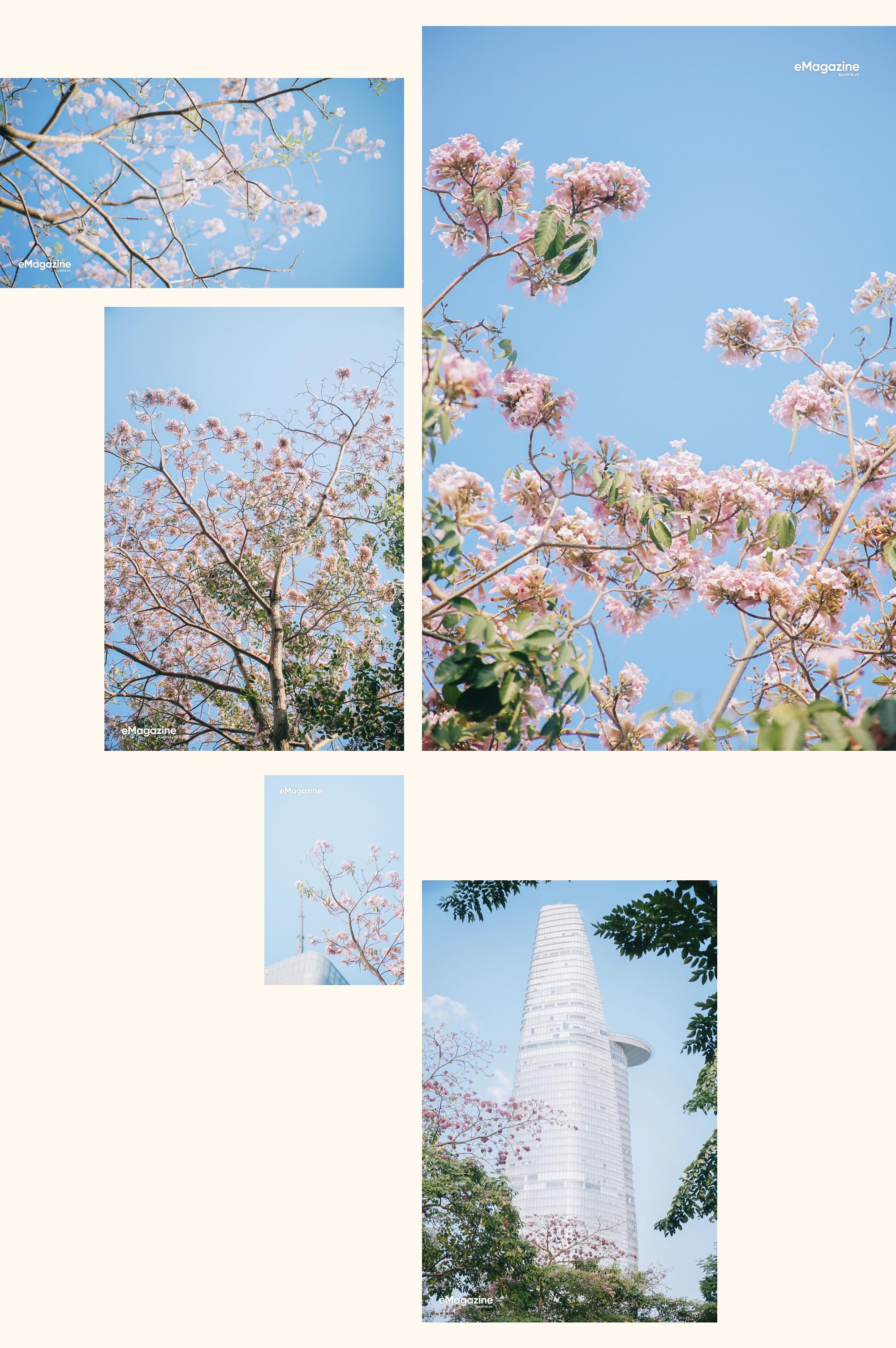 Hà Nội, Sài Gòn những ngày giao mùa: Hoa bay rợp trời làm lòng mình dịu lại - Ảnh 8.